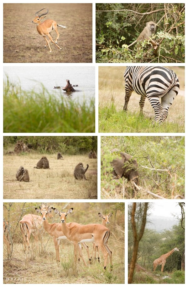 visiting Rwanda with children - animals seen at Akagera Park in Rwanda