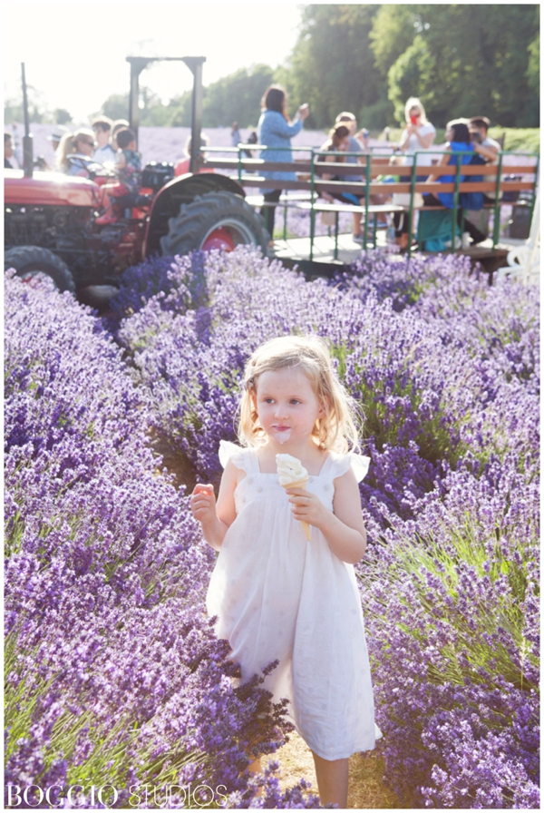 Tractor rides at Mayfield Lavender fields