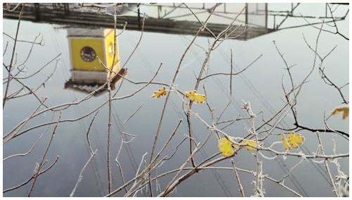 Frosted leaves in front of water with yellow tower reflection, Samsung Smart Camera