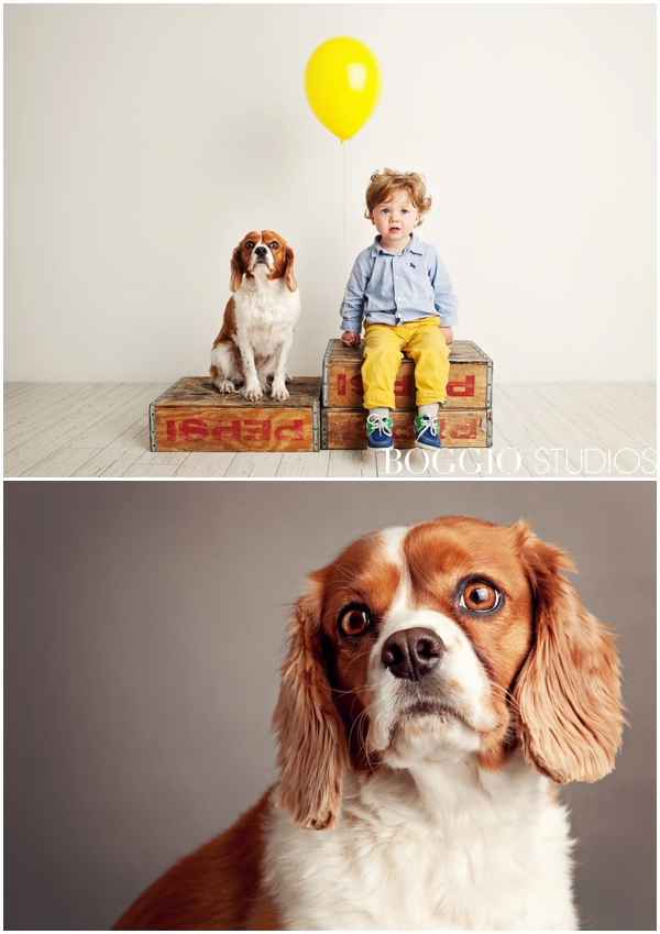 King Charles Spaniel and little boy